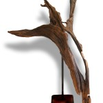 Driftwood Dancer by Nigel Peterken