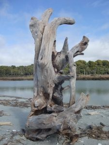Family Roots - Driftwood Art Sculpture