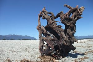 Network - Driftwood Art Sculpture