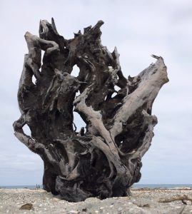 Transition - Driftwood Art Sculpture