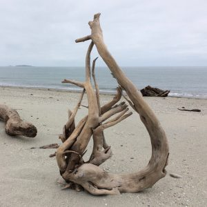 Harp - Driftwood Art Sculpture
