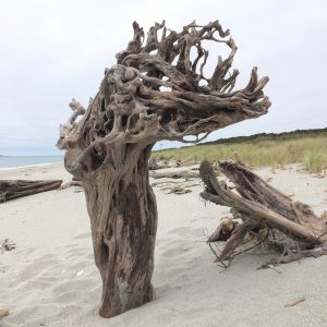 Driftwood Art Sculpture