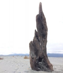 Fin - Driftwood Art Sculpture