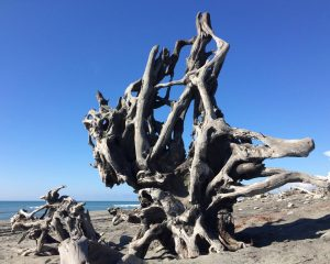 Medusa - Driftwood Art Sculpture